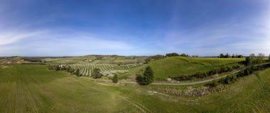 Цвести молодые сад сливы и поле рапса, взгляд сверху стоковое изображение rf