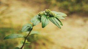 Цвести против предпосылки цветков белизна весны пущи цветка стоковые изображения
