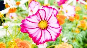 Цвести цветки получая ветер на обочине стоковые фотографии rf