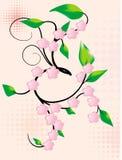 цвести Стоковая Фотография RF