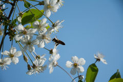 цвести Стоковое Изображение