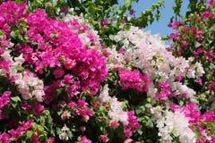цвести bush Стоковое фото RF