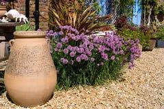 цвести chives Стоковые Изображения RF