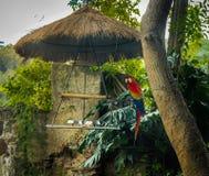 Цветастая ара шарлаха Стоковые Фото