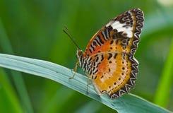 Цветастая бабочка Стоковые Изображения