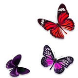 Цветастая бабочка Стоковое Фото
