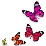 Цветастая бабочка Стоковое Изображение