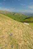 Цветастая весна в Альпах Стоковое Изображение