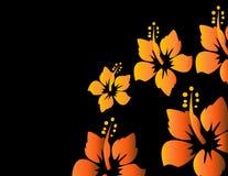 цветастая весна иллюстрации цветков Иллюстрация вектора