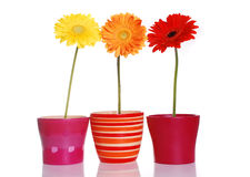 цветастая весна цветков Стоковая Фотография RF