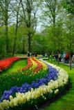 цветастая весна цветков Стоковое Изображение