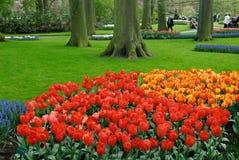 цветастая весна цветков Стоковые Фото