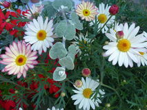 цветастая весна цветков стоковые фотографии rf