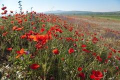 цветастая весна Стоковые Фотографии RF