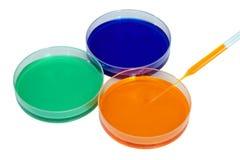Цветастая жидкость в тарелках для пользы лаборатории Стоковое фото RF