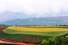 цветастая земля Стоковые Изображения