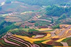 цветастая земля Стоковое фото RF