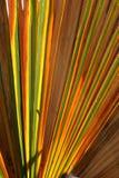 цветастая ладонь листьев стоковые фотографии rf