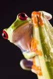 цветастая лягушка Стоковое Изображение