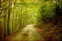 Цветастая осень в горах Стоковые Фото