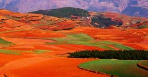 Цветастая хранят осень, котор Стоковая Фотография RF