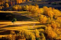 Цветастая осень Стоковая Фотография