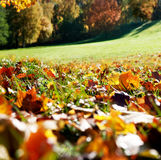 Цветастая осень Стоковые Фотографии RF
