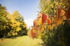 Цветастая осень Стоковое Изображение RF