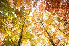Цветастая осень Стоковое Изображение