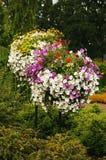 цветастая петунья Стоковое фото RF