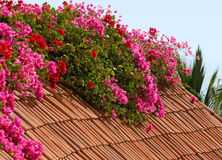 цветастая плитка крыши Стоковое Изображение RF