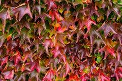 Цветастая предпосылка листьев Стоковое фото RF