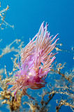 цветастая пурпуровая улитка стоковые фото