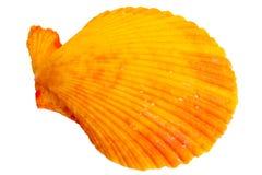 цветастая раковина моря Стоковое фото RF