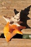 цветастая раковина раковины Стоковое Изображение