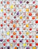 цветастая раковина Стоковые Фото