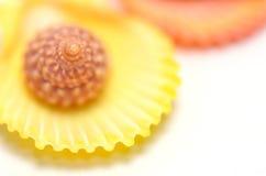 цветастая раковина Стоковые Изображения RF