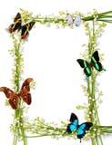 Цветастая рамка лета с бабочками Стоковая Фотография RF