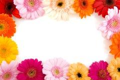 цветастая рамка цветка Стоковая Фотография