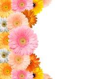 цветастая рамка цветка Стоковые Изображения RF