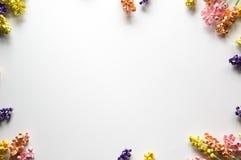 цветастая рамка цветка Стоковая Фотография RF
