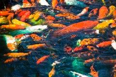 цветастая темная вода заплывания рыб Стоковое Изображение RF
