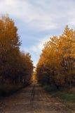 Цветастая тропка осени Стоковое Изображение RF