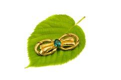 Цветастая фибула на зеленых листьях дерева на белизне Стоковые Фото