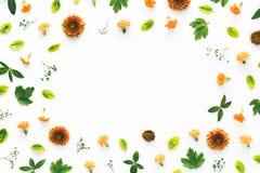 цветастая флористическая рамка Стоковое фото RF