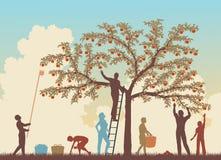 Цветастая хлебоуборка бесплатная иллюстрация