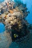 цветастая школа рифа g коралла тропическая Стоковые Изображения RF