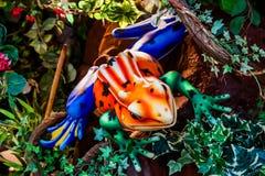 Цветастая лягушка Стоковые Фотографии RF