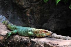 цветастая ящерица Стоковые Фото