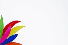 Цветастое великолепие пера Стоковая Фотография RF